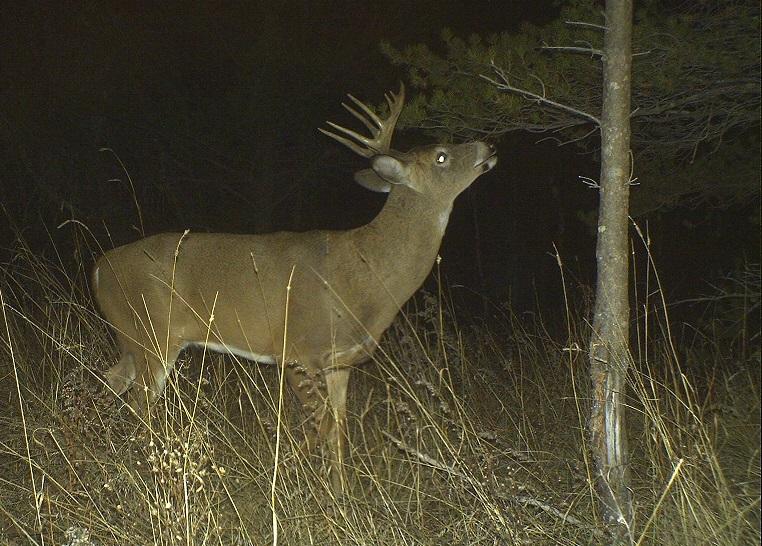 Six Myths in Deer Hunting That Need to Die