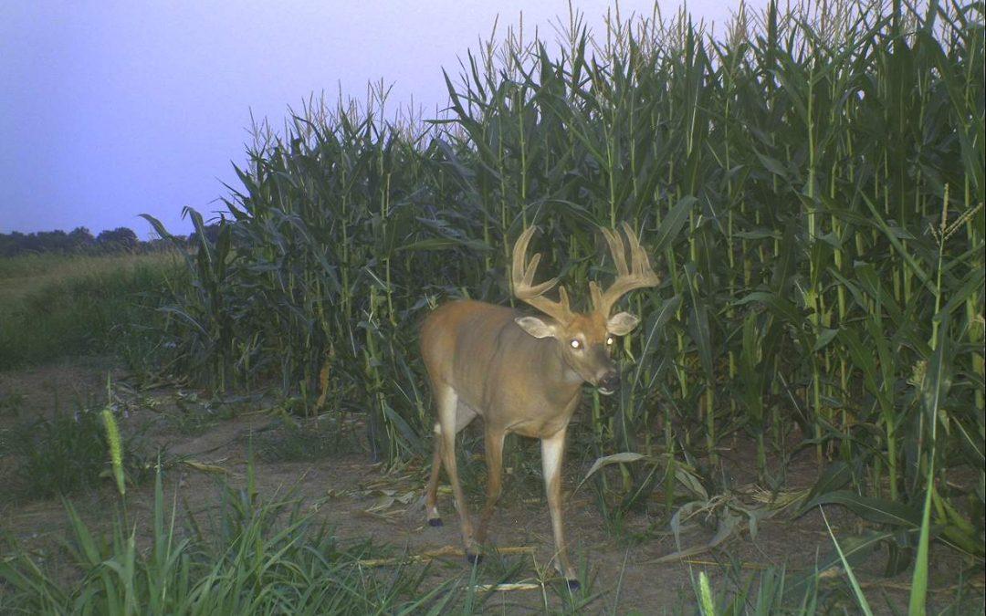 Three Camera Locations for Summer Deer Inventory