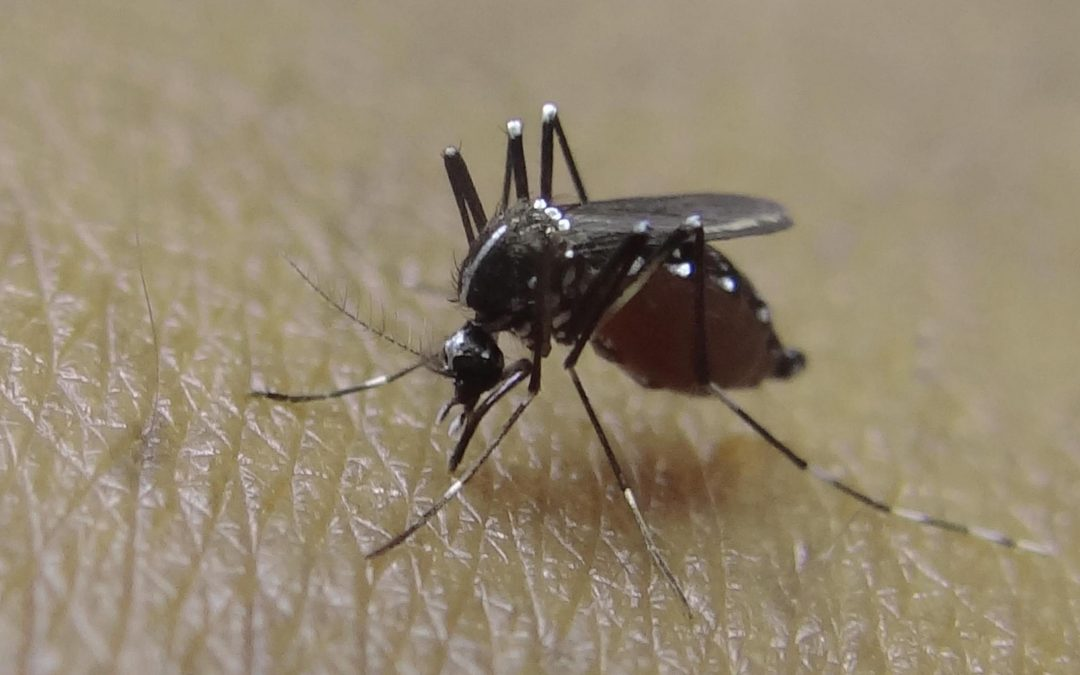 10 Things you didn't know about mosquitoes