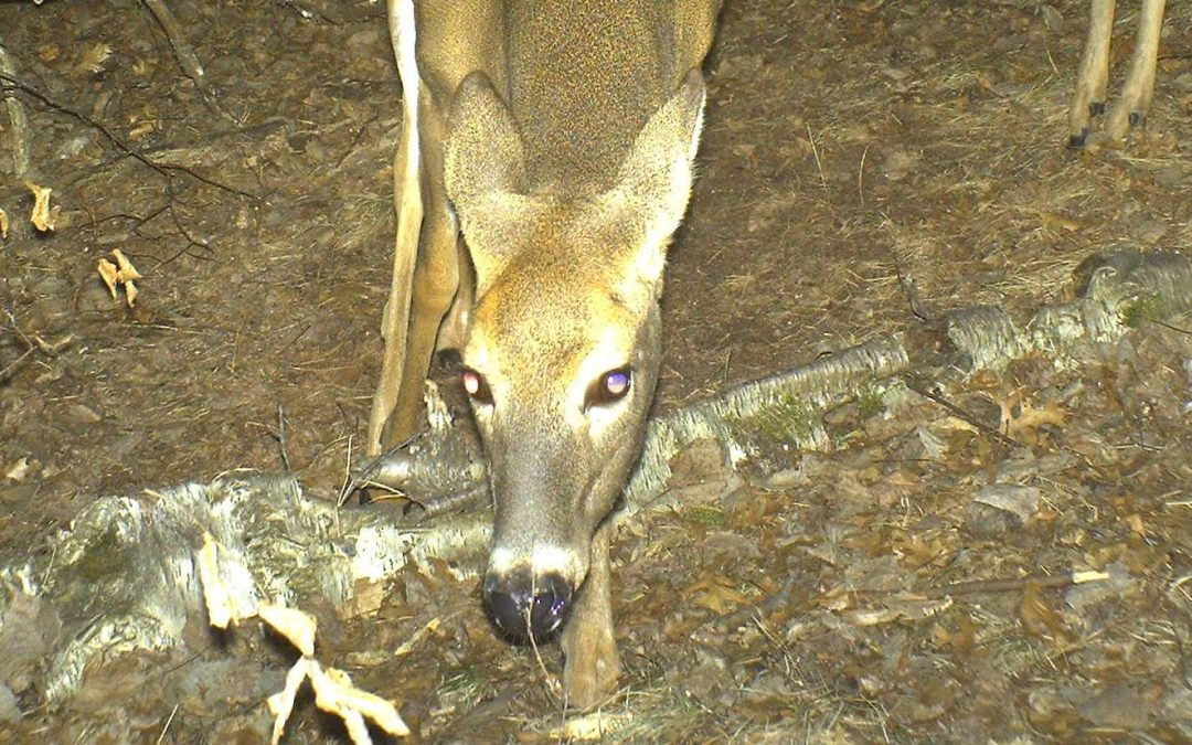 The Science of Scents: How Well Can Deer Smell?