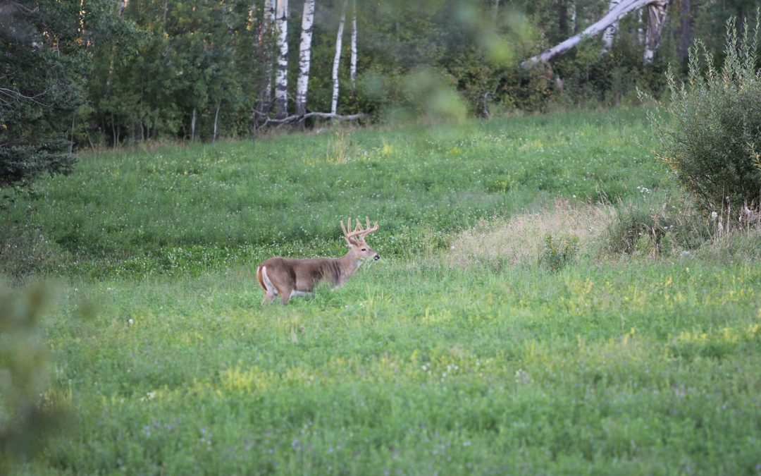 Do These 5 Things This Summer to Help You Shoot a Buck in the Fall