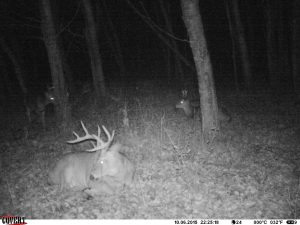 Cell phone scouting cameras like the Covert Blackhawk allow you to get photos of deer without leaving human scent intrusion. Bedding areas are perfect for this. The camera texts or emails you photos as it takes them.