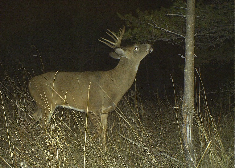 Six Myths in Deer Hunting That Need to Die