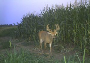 Three Camera Locations for Summer Deer Inventory | Bucks