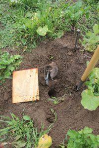 Dealing with Food Plot Pests | Bucks Bulls Bears