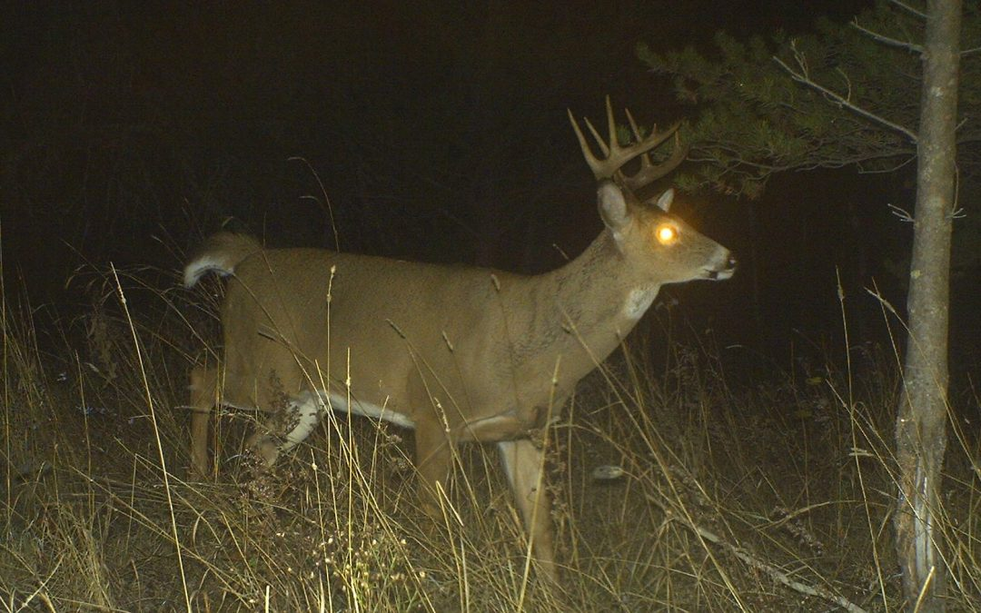 Are Bucks Avoiding Your Treestands?