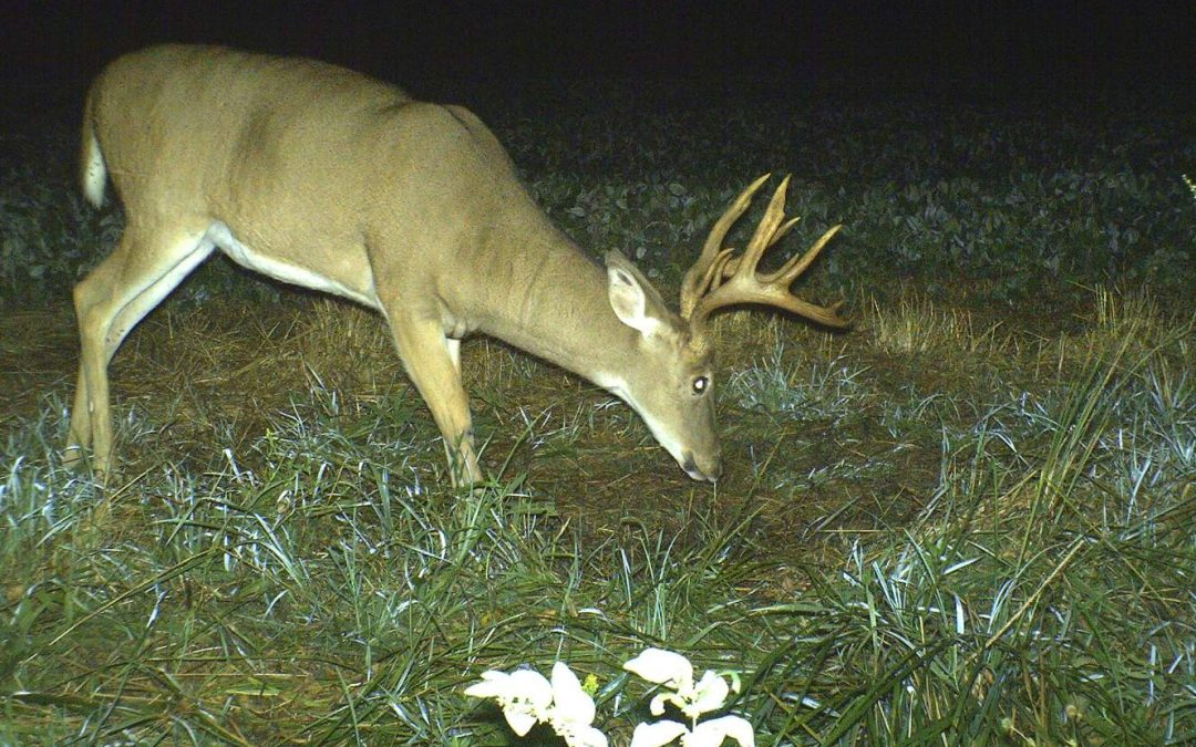 Three Top Opening Day Stand Sites for Mature Bucks