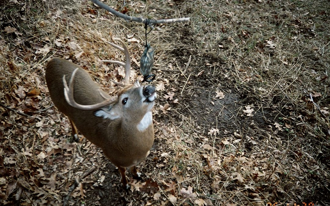 Late October Whitetail Madness