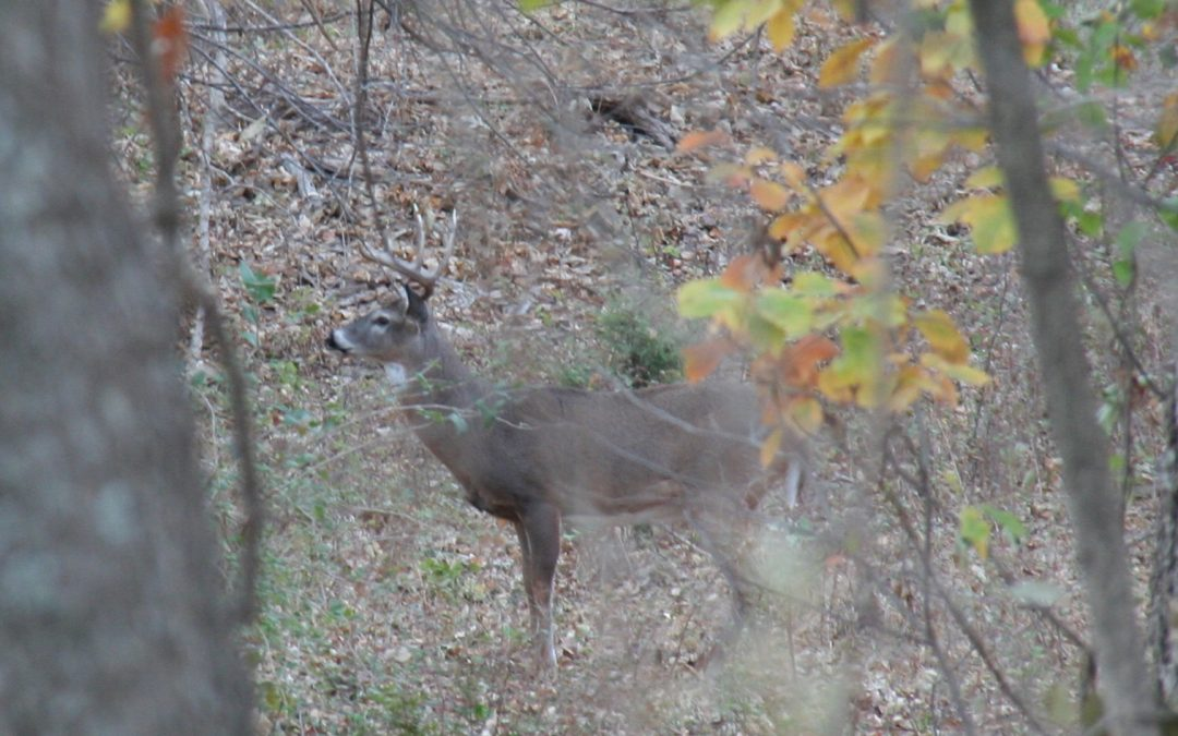 Every Deer Hunter Should Master These 3 Essential Calls