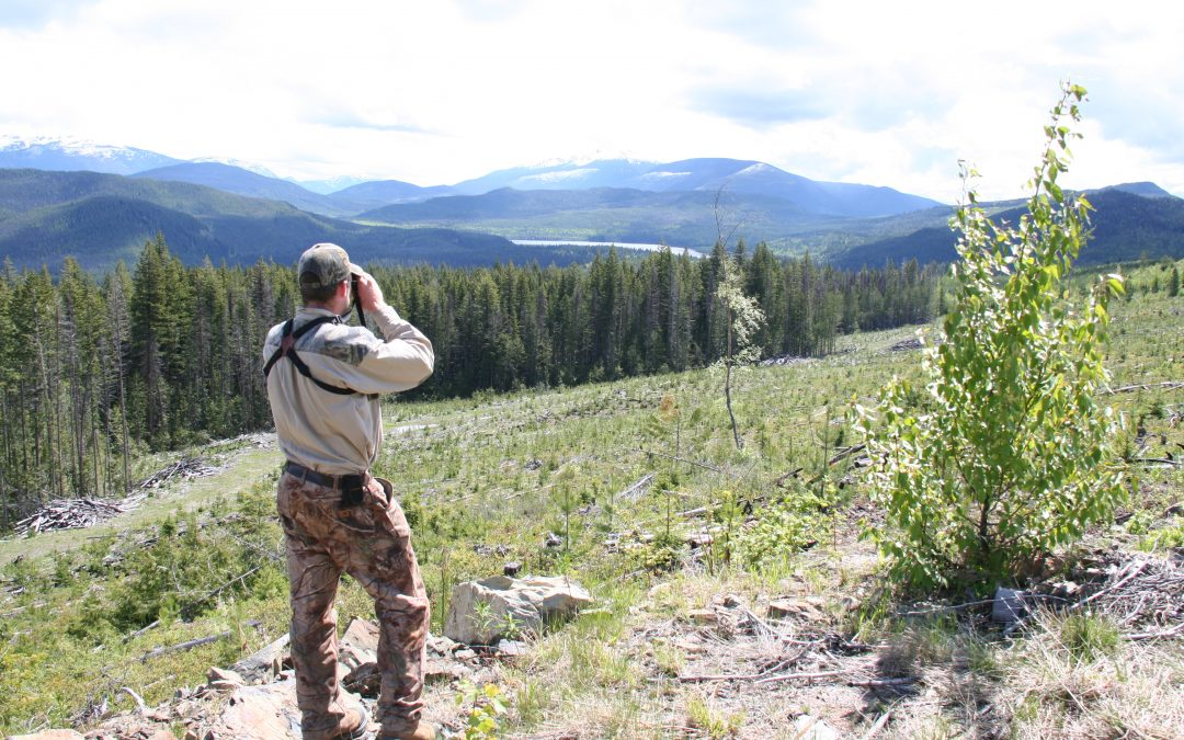 Bear Hunting Dream Trip: Cariboo Mountains, British Columbia