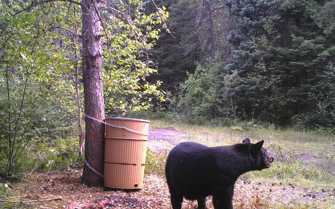 Interested in a Bear Hunt? Here are Some Tips for Choosing the Right Outfitter