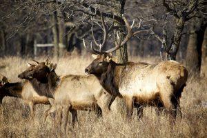The Beginner's Guide to Choosing an Elk Hunt | Bucks Bulls Bears
