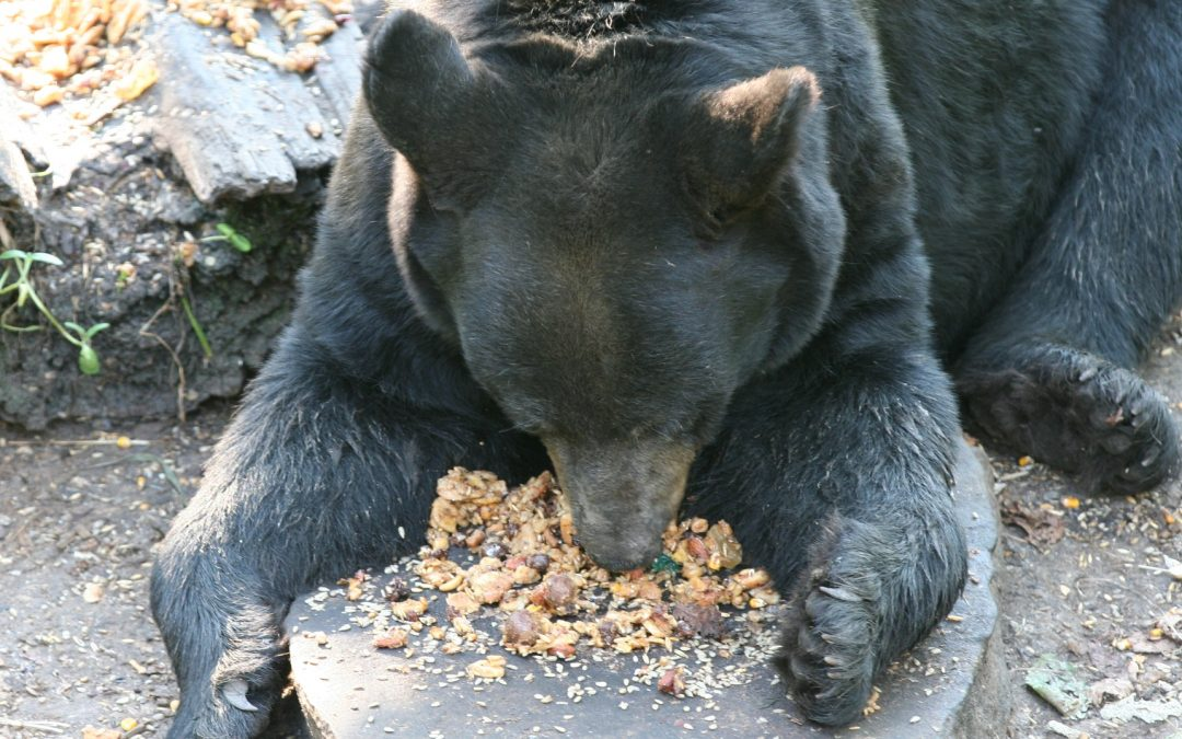 The Business of Bear Bait