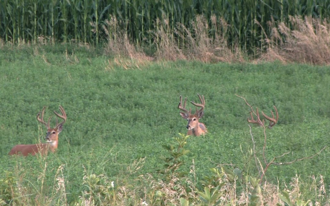 Learn your bucks through the lens