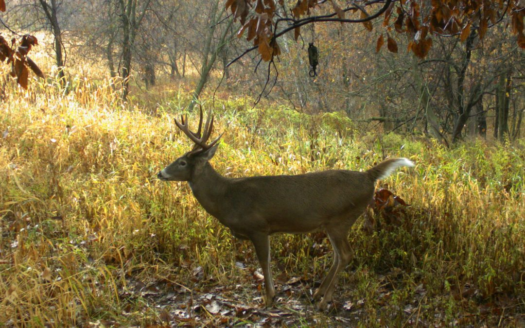 Four Weeks of the Rut: Be in the Right Place at the Right time