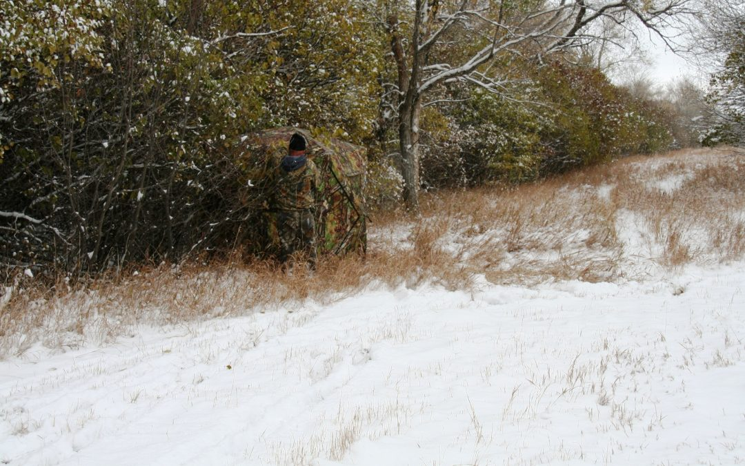 Late Season Hunts: Why Ground Blinds are Great